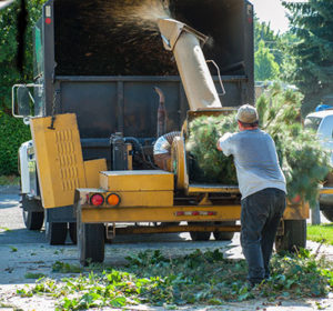 removing trees in your yard