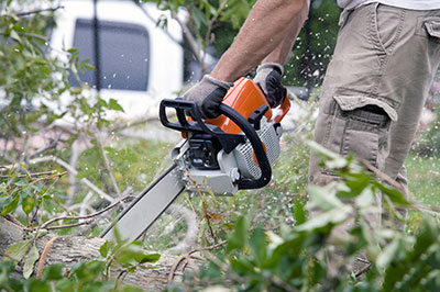 tree removal austin